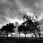 Nature in Black & White by Kathleen Daley
