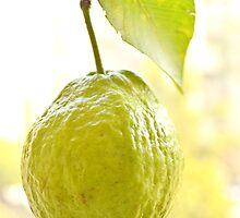 Guava by Ikramul Fasih