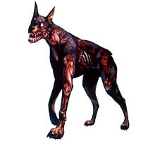 Zombified Dobermann Photographic Print