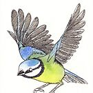 Blue tit Watercolour by shiro