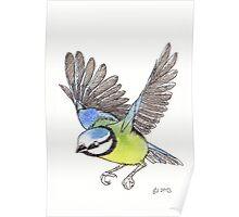 Blue tit Watercolour Poster