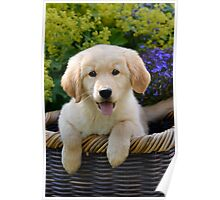 Charming Goldie Puppy Poster