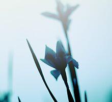 Blue haze by Colleen Milburn