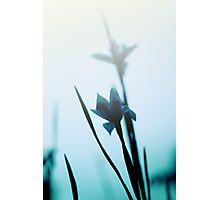 Blue haze Photographic Print