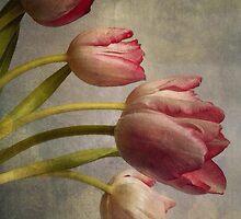 Tulips by Sarah Jarrett