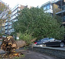 Fallen Elm Tree by Sue Robinson