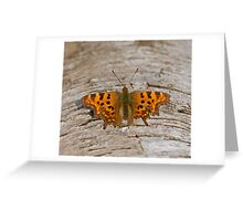 Comma Butterfly Greeting Card