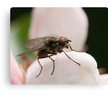 Fly Macro Shot Canvas Print
