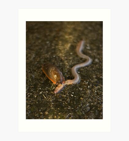 Slug Eating Earthworm Art Print