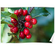 Holly Berries 2 Poster