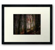 Oh That Light ~ Fall Colors ~ Framed Print