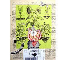 SEMILLA (seed) Photographic Print
