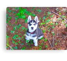 Siberian Husky Puppy: You Have My Attention Canvas Print