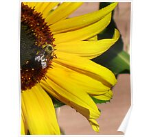 Sunflower and Bee in Vibrate Earth Tones Poster