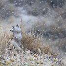 Frosty Fox by Arla M. Ruggles