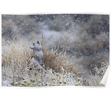 Frosty Fox Poster