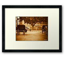Curious horse  Framed Print