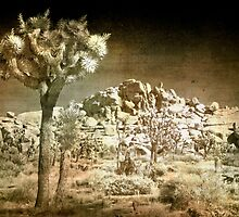 Far Side of the Desert  by Anne  McGinn
