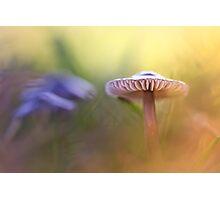 Mystic Mushroom.... Photographic Print