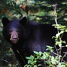 Scary beary close up by Amanda Huggins