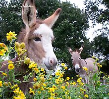 Garden of the Donkeys by kristijohnson