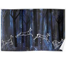 Dancing through the trees Poster