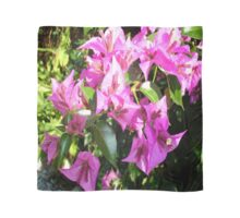 Purple Pink Bougainvillia In Blossom  Scarf