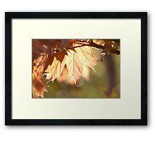Maple Glow Framed Print