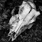 Deer skull by wsellers