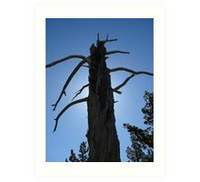 Withered Trunk at Tahoe Art Print