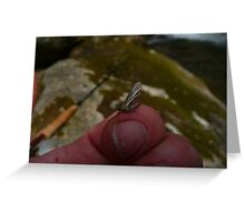 Mayfly in the Canyon Greeting Card