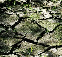 Cracked Earth  by PictureNZ