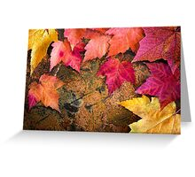 Maple Rainbow Greeting Card