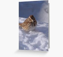 Song Sparrow in Snow Greeting Card