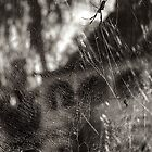 Web by njordphoto
