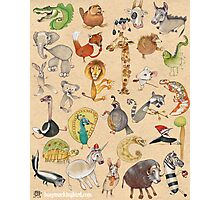 ABC Animals Photographic Print