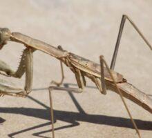 Praying Mantis and Shadow Sticker