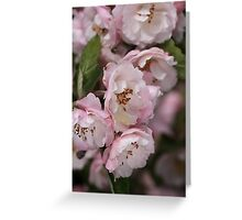 Marshmallow Pink & White Blossom Greeting Card