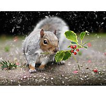 The Christmas Squirrel Photographic Print