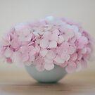 home grown hydrangea by Sue Hammond