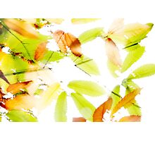 Leaves Splash Abstract 3 Photographic Print