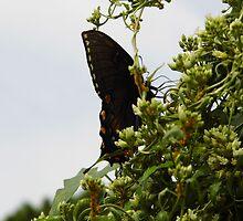 Swallowtail by WildestArt