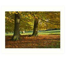 Autumn beeches Art Print