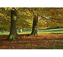 Autumn beeches Photographic Print
