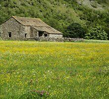 Barn in a flower meadow by Judi Lion