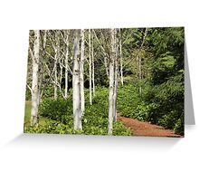 Birch Lovers Trail Greeting Card