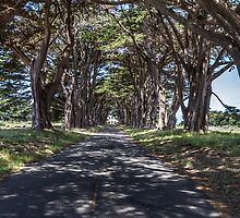 Cypress Tree Avenue - Point Reyes by Richard Thelen
