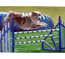 Australian Shepherd Agility Photographic Print
