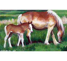 Belgian Mare and Foal Photographic Print