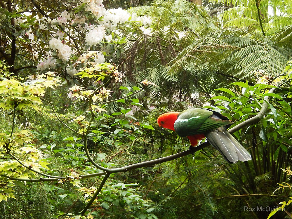 King Parrot by Roz McQuillan